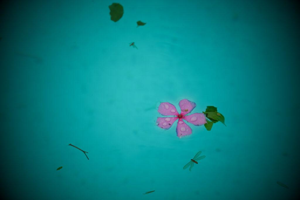 after the storm, blues, fallen leaves, flower, meditation, mlancholy, moody, pastel colours, pink flower, pool, rain drops, rainy, rainy season, serene*rain, storm, swimmingpool, tropical