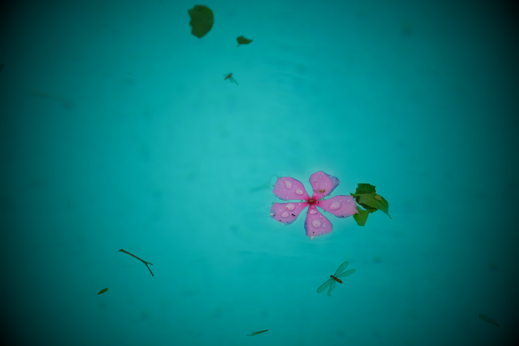 after the storm, blues, fallen leaves, flower, meditation, mlancholy, moody, pastel colours, pink flower, pool, rain drops, rainy, rainy season, serene*rain, storm, swimmingpool, tropical