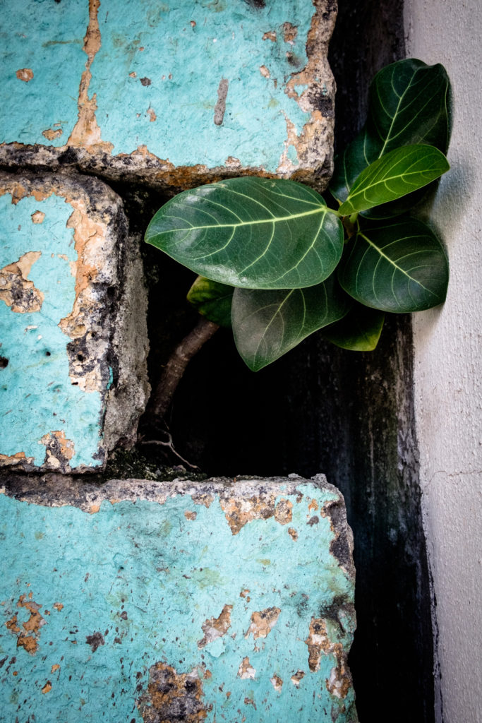 Mauritius, abstract photography, contemporary art, old paint, old wall, old walls, walls